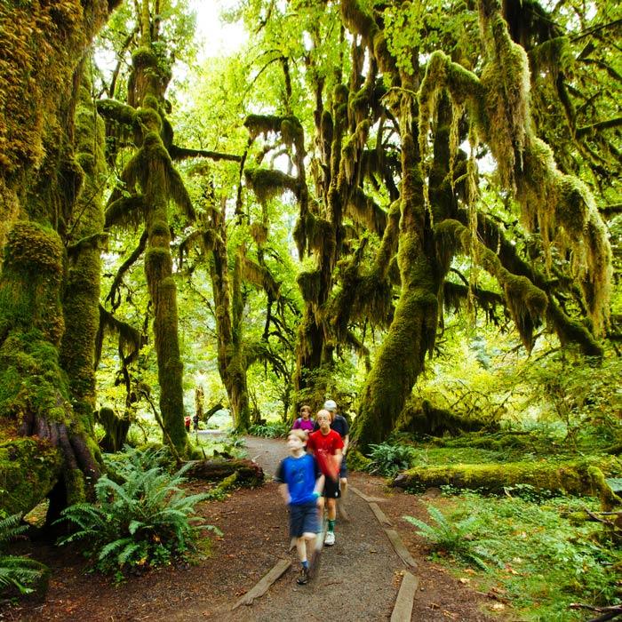 Dzieci biegają po szlaku Hall of Mosses Trail w Olympic National Park's Hoh Rain Forest's Hoh Rain Forest
